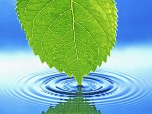 Что такое ионизатор воды