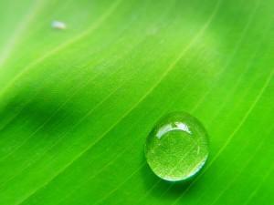 Чем полезен ионизатор воды