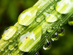 Окислительно-восстановительный потенциал воды
